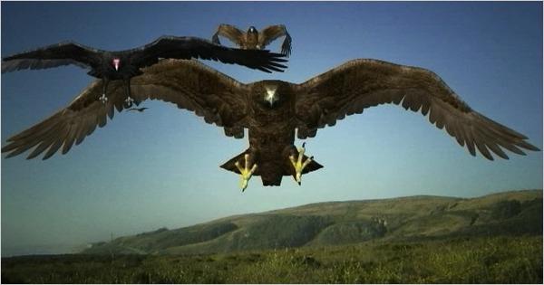 Birdemic-2010
