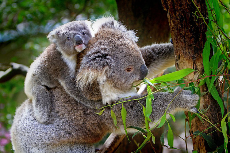 The Best Places To See Aussie Wildlife While Camping 3